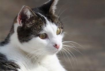 Piden reconocer con estatua al único gato que viajó al espacio