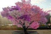 ¡Increíble! Este árbol da 40 tipos de frutas