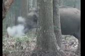 """VIDEO El misterio del elefante """"fumador"""""""