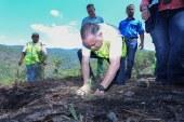 Con siembra de arbolitos para reforestar El Merendón conmemoran el Día del Árbol en San Pedro Sula