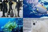 En peligro áreas de protección marina por cambio climático