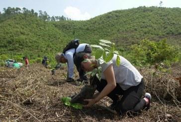 Con el apoyo de voluntarios y empresa privada reforestan cerro El Tigre de Cofradía
