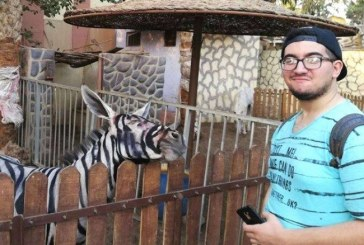 Cierran zoológico por pintar a una burra como cebra