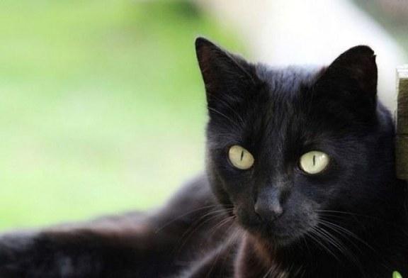 VIDEO El gato que ladra cuando cree que nadie lo mira