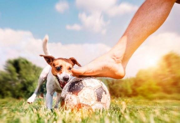 Perro ingresa a un partido de futbol y lesiona a un jugador (+video)
