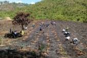 Clubes Rotarios de San Pedro Sula reforestan Cerro El Tigre, Zona de Reserva de El Merendón