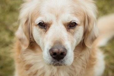 Perro policía sufre sobredosis al detectar drogas en un pasajero de un crucero