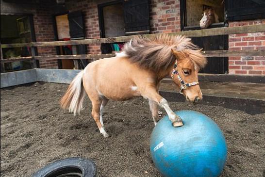 Pony causa sensación por sus dotes de futbolista (+video)