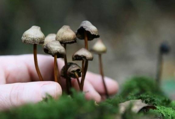 Quieren legalizar los hongos alucinógenos en EEUU