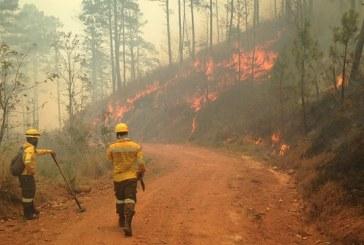 ICF pide a la población contribuir a frenar incendios forestales