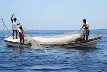 Cientificos alertan sobre escasez de peces por el calentamiento global