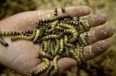 Una mujer comió gusanos por un mes para curar su cáncer y no podrás creer lo que pasó