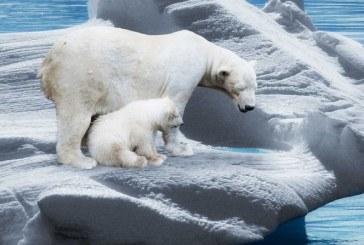 Convocan a huelga mundial por el cambio climático el próximo 20 de septiembre