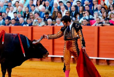 VIRAL: Un torero limpió las lágrimas de un toro antes de matarlo (+video)
