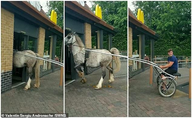 Viral: caballo tenía tanta hambre que irrumpió en un restaurante de comida rápida (+video)