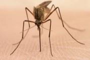 Con la advertencia de que el dengue mata, autoridades activan emergencia sanitaria