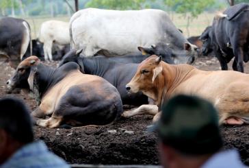 20 millones de lempiras están siendo desembolsados para apoyo de pequeños productores agrícolas