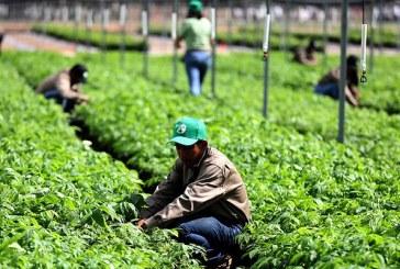 Anuncia Hernández: Honduras está lista para desarrollar programas firmados con México que generarán 20 mil empleos