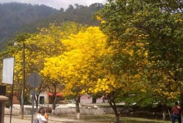 San Nicolás, Santa Barbara celebra el X Festival de la Rosquilla