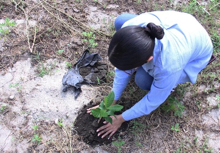 Estudiantes de UTH realizan jornada de reforestación en bordo Río Blanco de SPS
