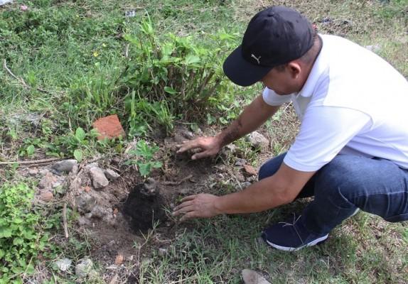 reforestación UTH 3