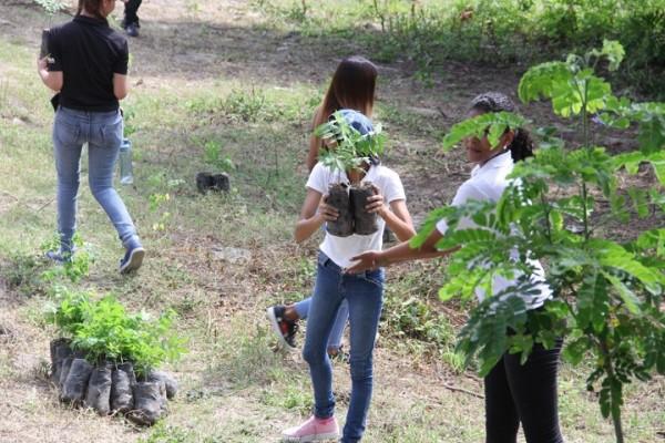 reforestación UTH 5