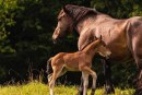 Un caballo rescata a su familia en una zona incendiada de California
