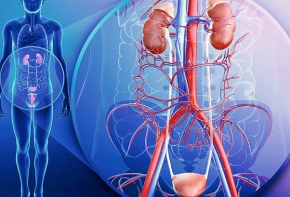 ¿Sabías que es posible vivir sin algunos órganos de tu cuerpo o con parte de ellos? Descúbrelos aquí