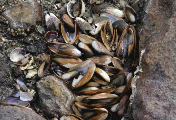 Alarma en El Salvador por muerte masiva de moluscos en la bahía de La Unión