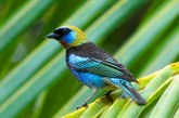 Segunda edición del Festival de Aves del Caribe se realizará del 6 al 8 de marzo