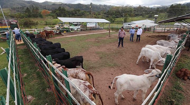 El primer Distrito Lechero Especializado del país se establece en Subirana, Yoro
