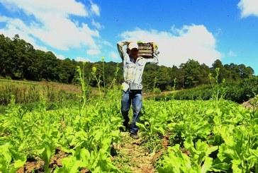 Productores son verdaderos héroes al garantizar con su esfuerzo la seguridad alimentaria de los hondureños