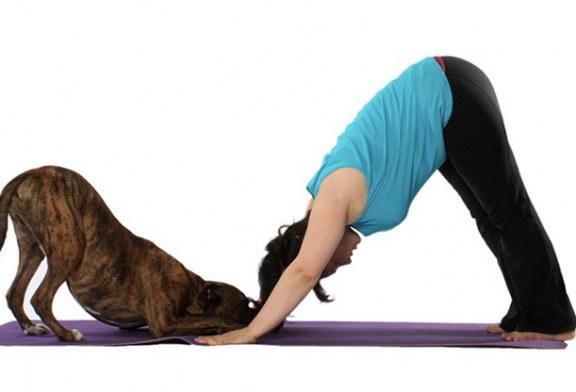 Yoga para mascotas, una experiencia grata y de relajación