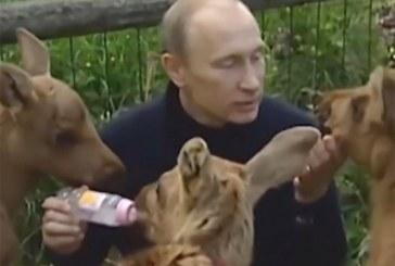 Vladimir Putin es captado alimentando a alces bebés
