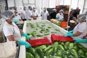 Inauguran primera planta exportadora de vegetales orientales única en Centroamérica