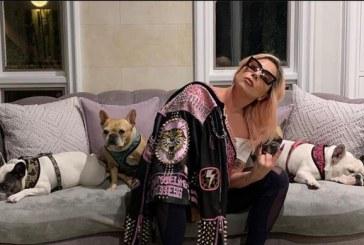 Le disparan al cuidador de los perros de Lady Gaga mientras los paseaba y le roban las mascotas