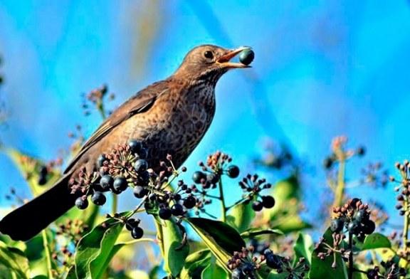 Justicia francesa declara ilegal la caza de aves con técnica de pegamento