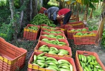 Promueven tecnologías israelíes que pueden innovar el sector agroalimentario en Honduras